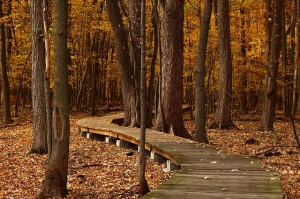 path-in-the-forest